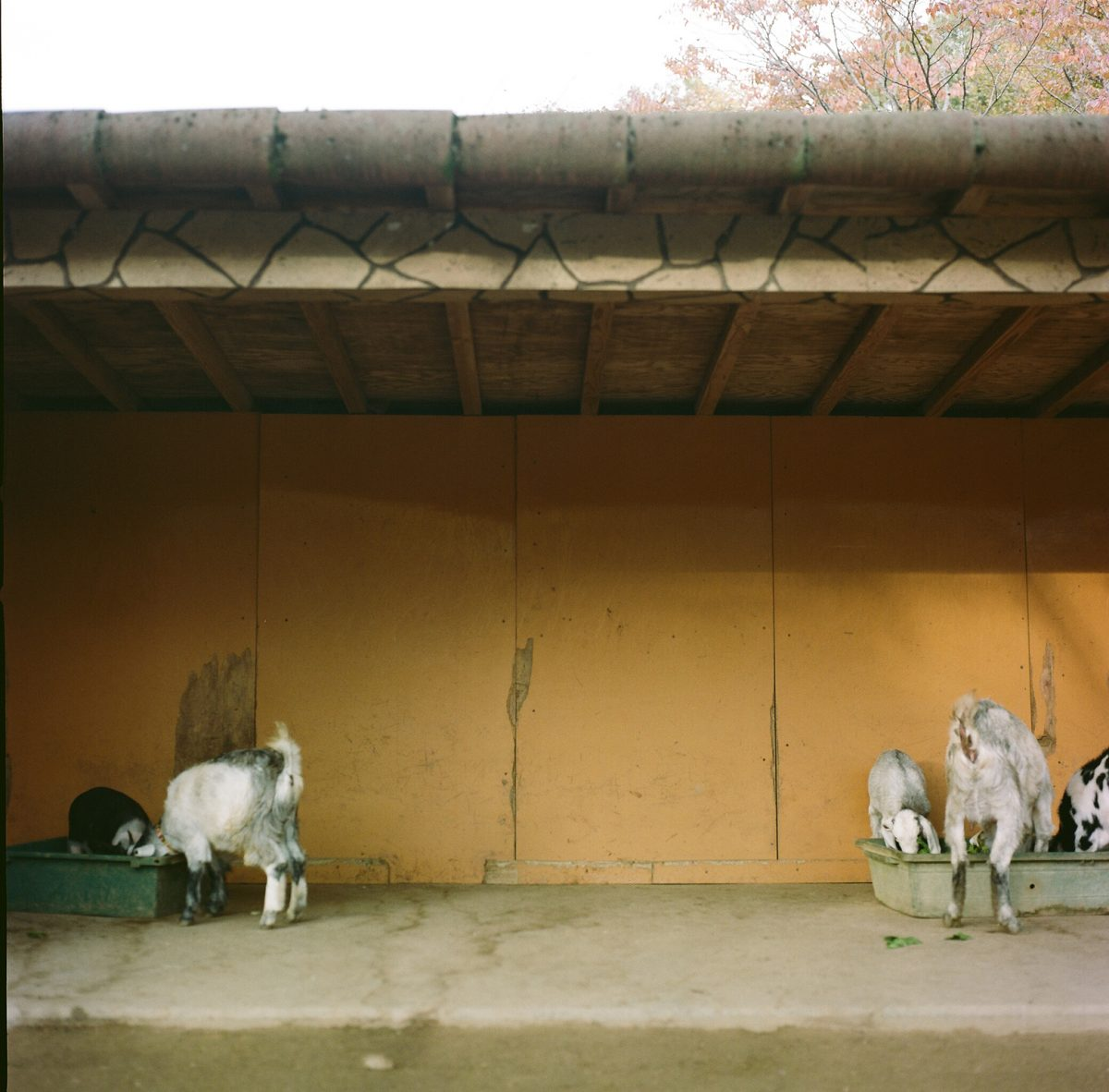 【福知山動物園】 福知山市猪崎377-1