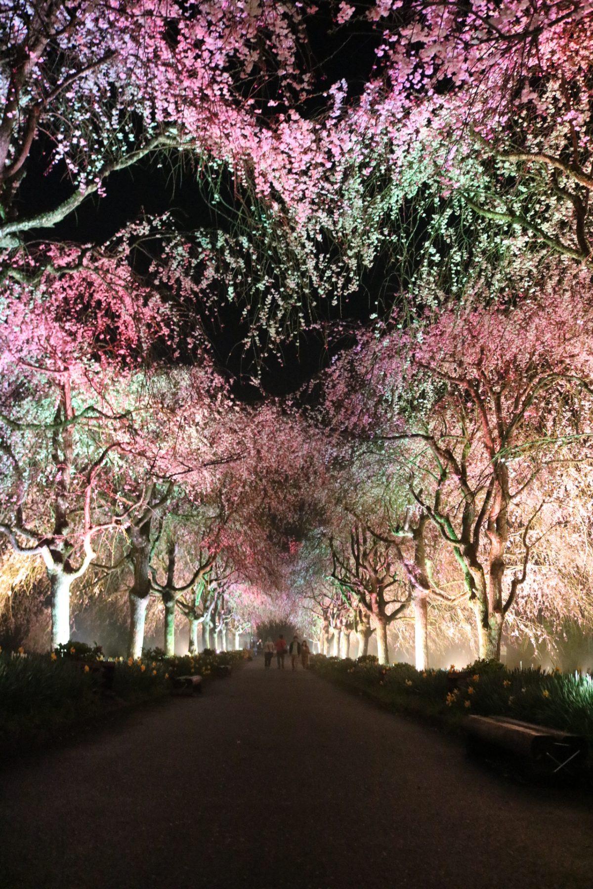 2017年4月15日 【京都府緑化センター ライトアップ】 福知山市夜久野町平野1906