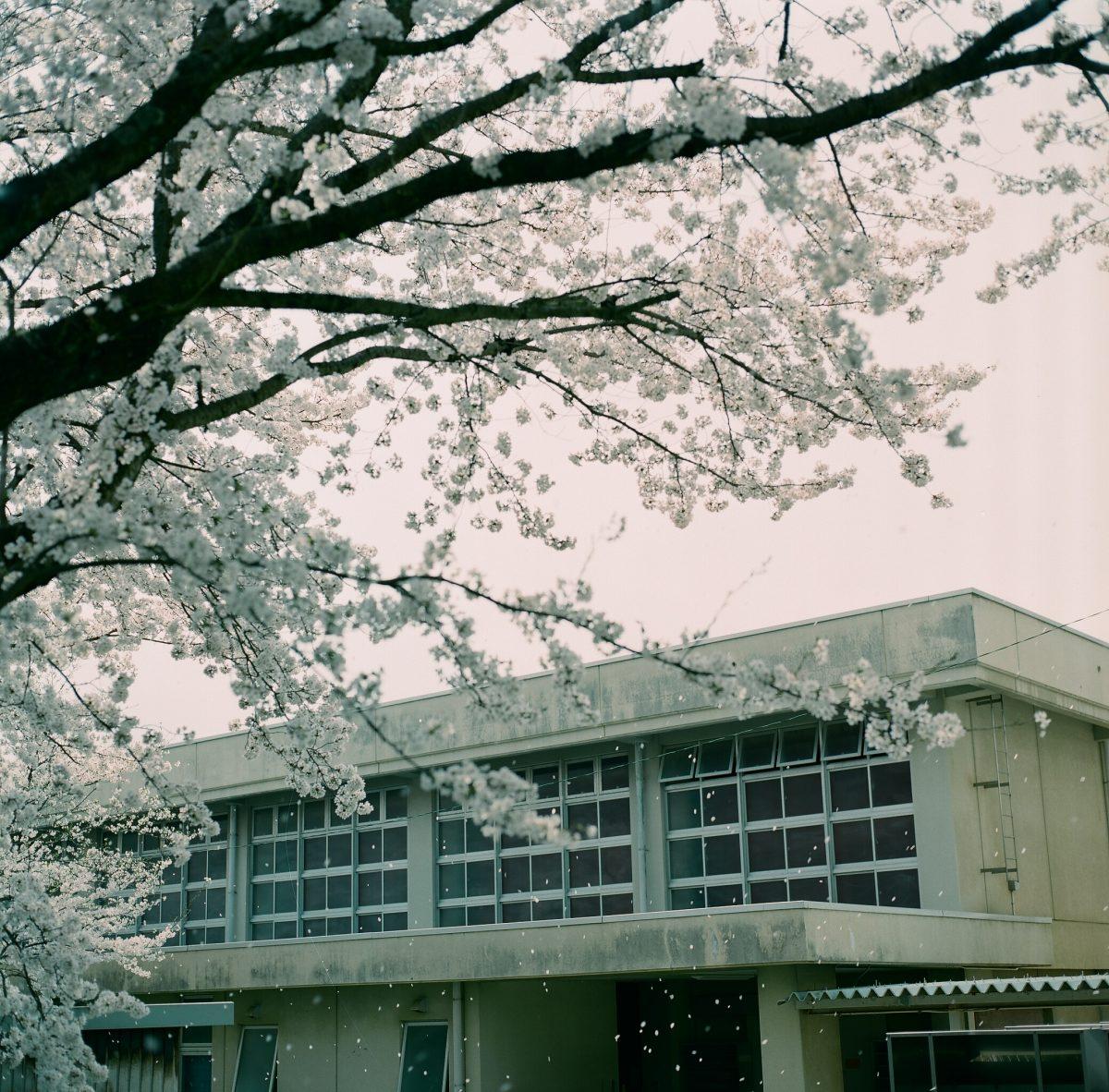 2018.4.2【桜】舞鶴医療センター前