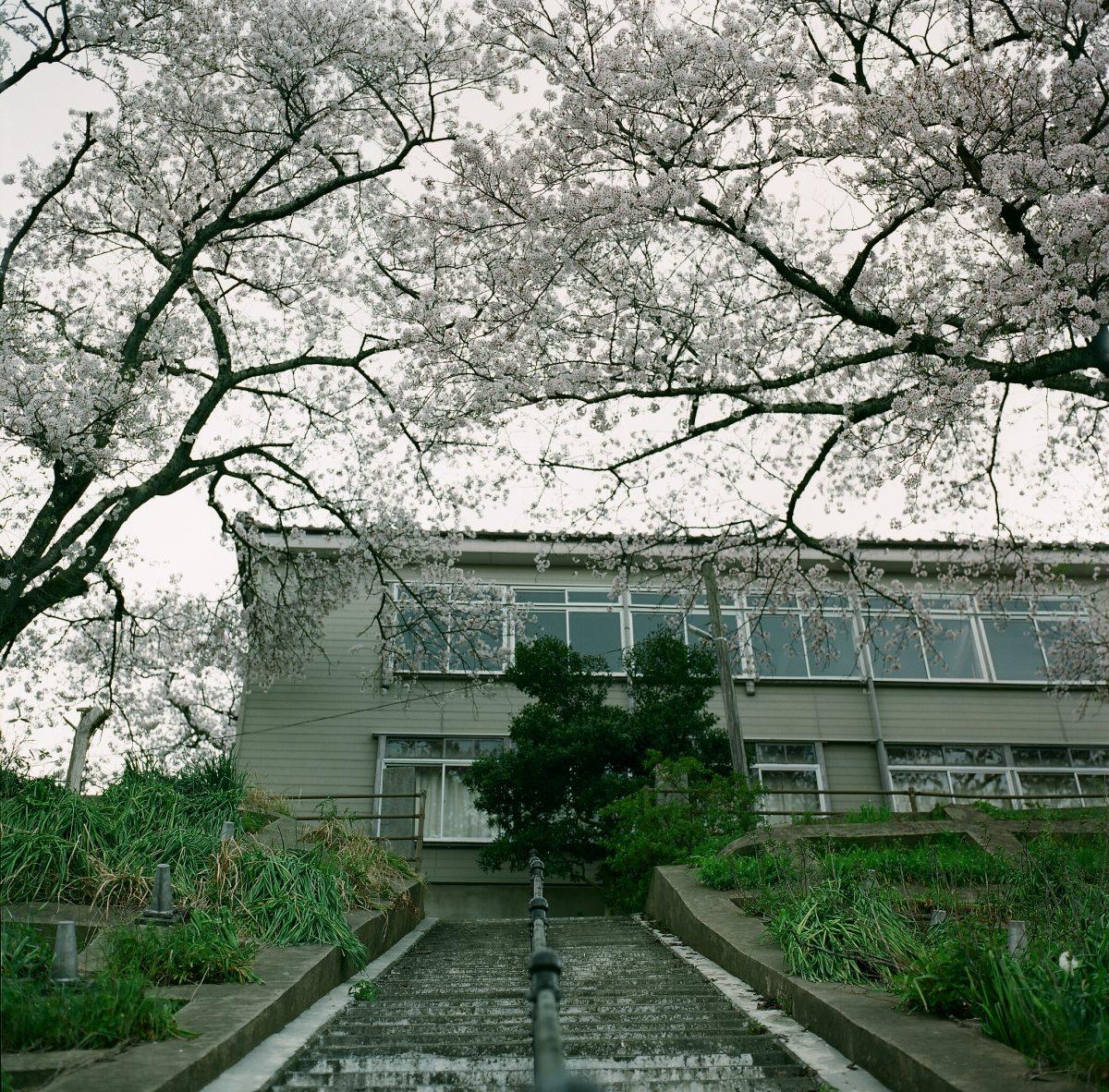 2018.4.4【桜】与謝郡伊根町