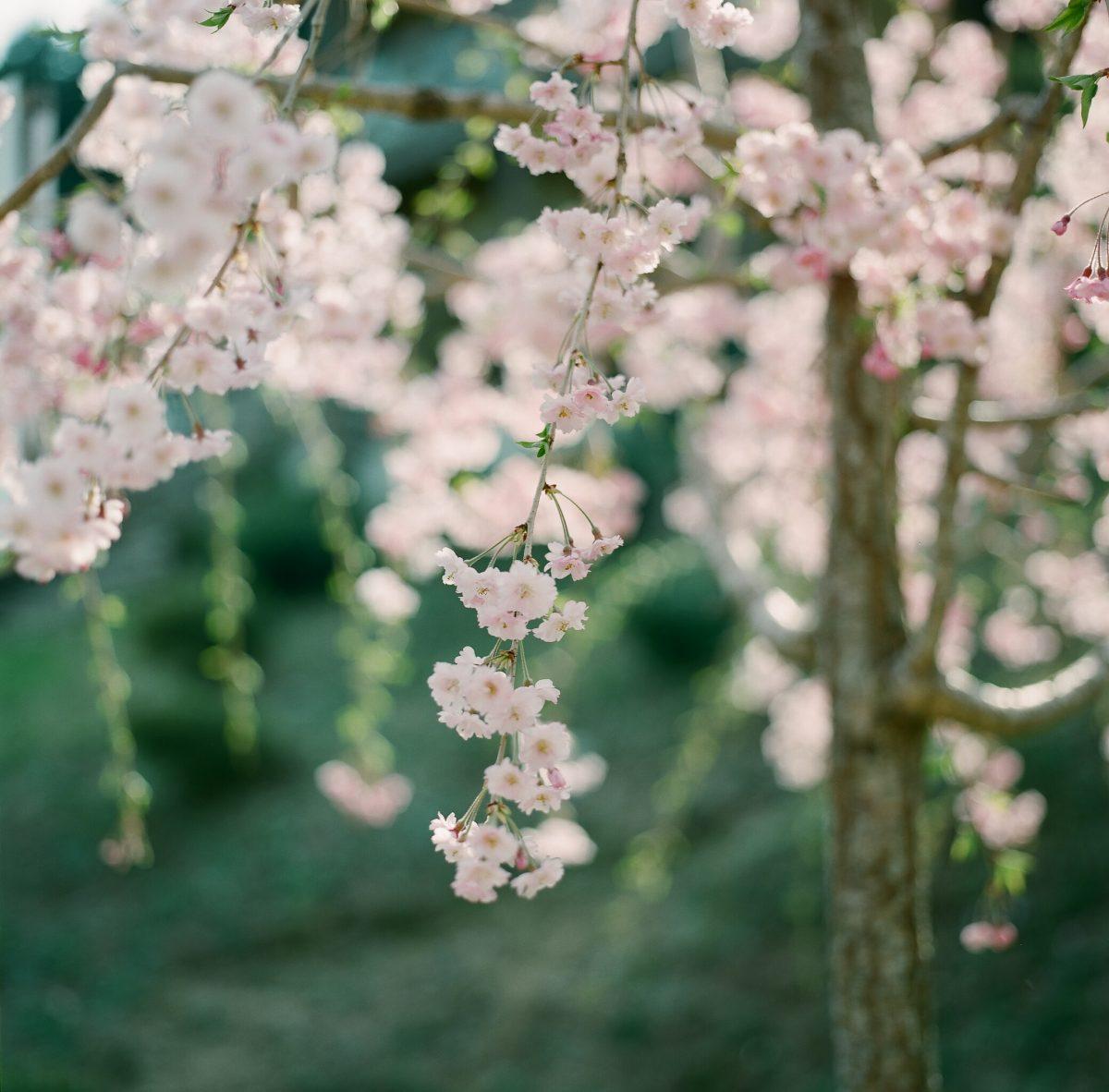 2018.4.2【大内峠一字観公園】与謝郡与謝野町弓木
