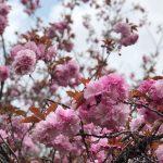 2020.4.17[猪崎城跡]福知山市猪崎