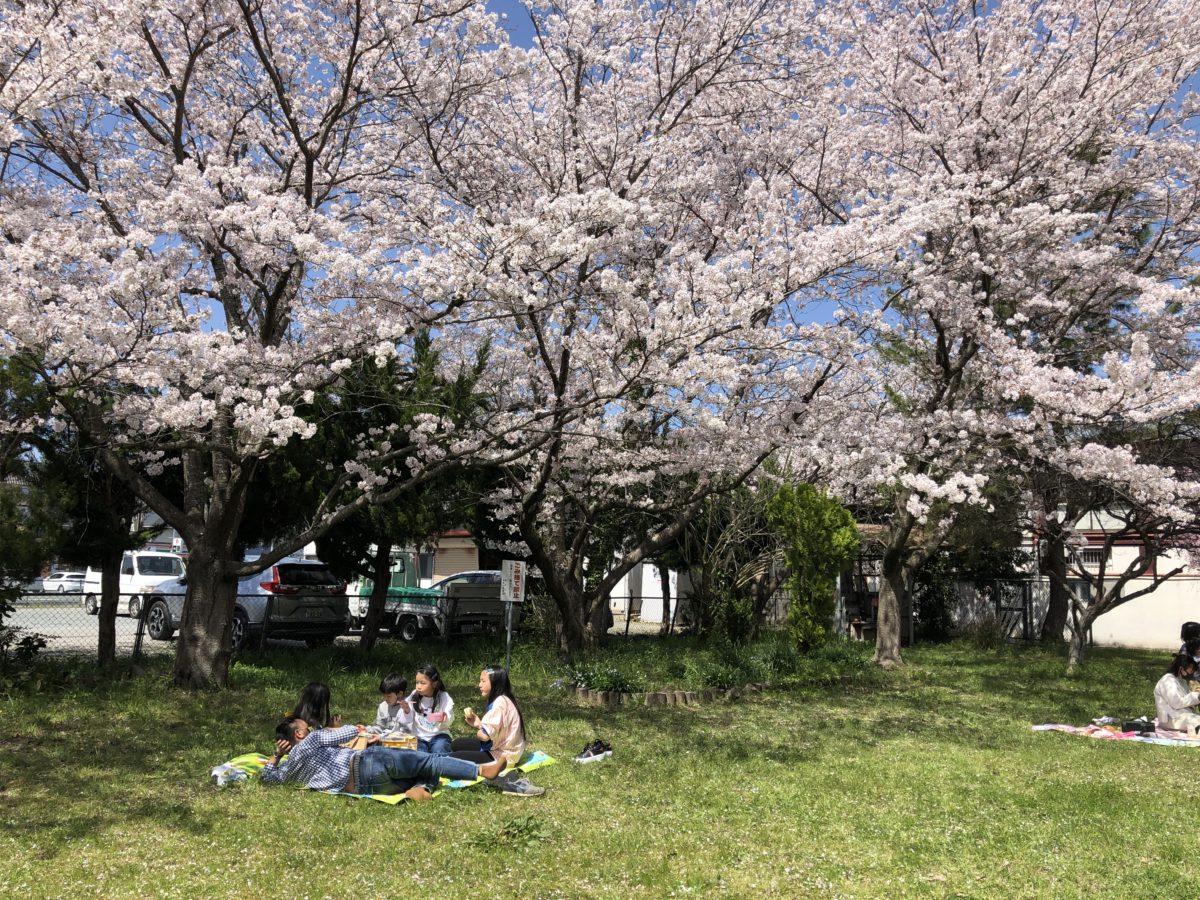 2021.4.1[お花見]福知山市